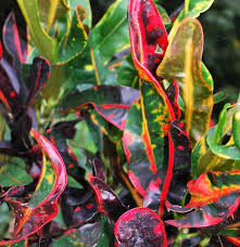 october featured plant list