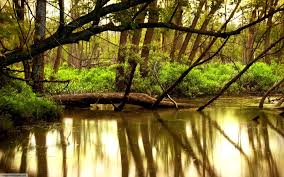 Forests Jungle Cool Nature Water Forest Desktop Backgrounds for HD