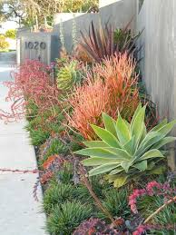 Small Picture 51 best Succulents images on Pinterest Succulent gardening