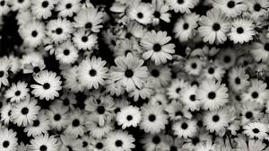 black and white flowers tumblr photography. Beautiful And Mybeautifulflower  On Black And White Flowers Tumblr Photography