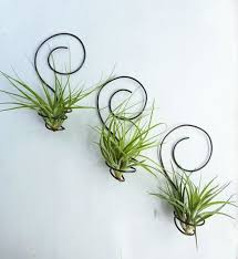 wall mount air plant display idea 3