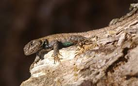 Reptiles And Amphibians In Your Backyard Nc State Extension