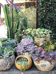 essential tools for your succulent garden