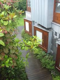 Small Picture 58 best Plants and garden in Dublin and Ireland images on