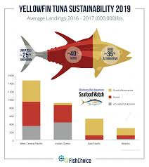 Tuna Fish Size Chart Yellowfin Tuna Fishchoice