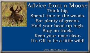 Moose Quotes. QuotesGram via Relatably.com