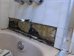 delectable 60 black mold in bathroom pipes decorating black mold in my bathroom wall
