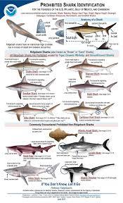 Shark Size Chart Id Chart