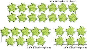 raisedbed numberofplants why raised beds