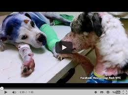 Unzertrennlich Misshandelte Hunde Werden Beste Freunde