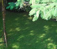 Em seguida fixe uma estaca de bambú de aproximadamente 20 centímetros, próximo a extremidade superior da&nb. Grama Para Sombra Resistente A Sombra Central Da Grama