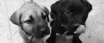 image parvo puppies