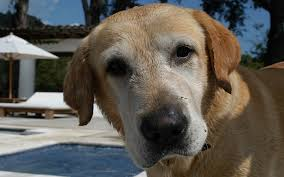 natural heartworm treatment. Heartworm Treatments For Dogs Natural Treatment