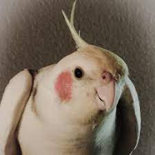 Lola Bird (@LolaChirpChirp) | Twitter