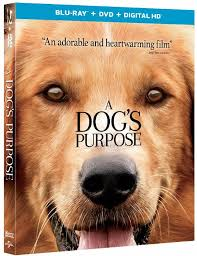 a dog s purpose book cover. Delighful Cover I Am A HUGE Animal Lover Love Animals In All Shapes And Sizes Have  Great Compassion For Too Canu0027t Even Watch Those Commercials On  For A Dog S Purpose Book Cover K