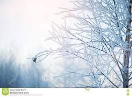 background images landscape winter. Perfect Landscape Winter Nature Background Landscape Scene Frozen Inside Background Images Landscape
