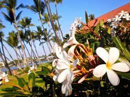 the big island of hawaii  photo essay