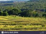 imagem de Corguinho Mato Grosso do Sul n-18