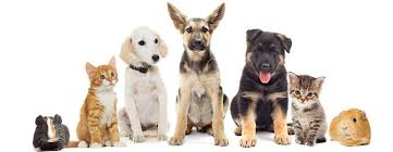 Finest Pet Resources Stores