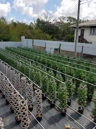 100 tower hydroponic farm for