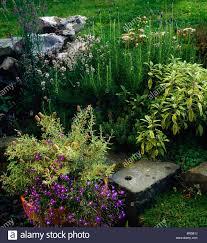 Kitchen Garden Herbs Ireland Irish Gardens Kitchen Garden Herbs And Flowers In Stock