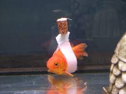 goldfish wheelchair cork sling float coverimage