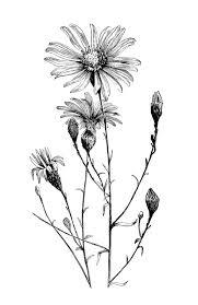 Vintage Flower Illustration Black And White Google Search