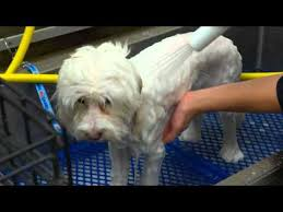 Petsmart Bather Behind The Scenes With Petsmart Dog Grooming Services Xplore Pets