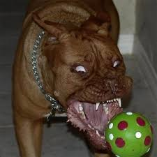 pitbull dog attacks man. Modren Man Man Suffers Severe Puncture Wounds When Neighboru0027s Pit Bull Attacks Dog  Bite For Pitbull Attacks