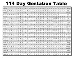Pregnancy Gestation Chart Swine Pig Gestation Table