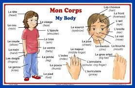 New French Language School Poster Words About Parts Of The Body Wall Chart For Home And Classroom French And English Bilingual Text