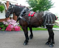 my draft horse super store bio 3 strap farm & parade harness horse harness image at Horse Harness