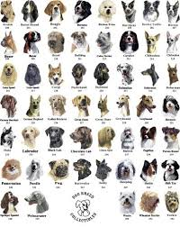 Dog Breed Chart With Names Every Dog Breed Dog Breeds List Dog Breeds Chart Dog