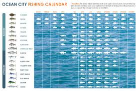 Ocean City Md Tide Chart 2018 What Fish To Catch When To Catch Them In Ocean City Md