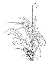 2781 best tillandsia's (air plants) and bromeliads images on House Plants For Sale how to build air plants house plants for sale online