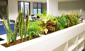 office greenery. Modren Greenery A Row Of Office Plants For Greenery I