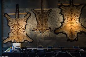 tiger and leopard skin rugs are displayed on the wall ahead of the auction
