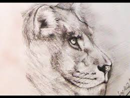 easy lion drawings in pencil. Unique Drawings In Easy Lion Drawings Pencil A