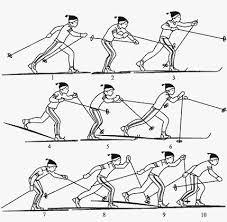 четырехшажный ход методика обучения  Попеременный четырехшажный ход методика обучения
