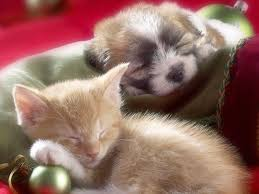 puppies and kittens wallpaper. Brilliant Wallpaper Kitten And Puppy  Kittens Wallpaper 12929278 Fanpop To Puppies And E