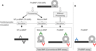 Bnp Levels Chart Change In The Nt Probnp Mature Bnp Molar Ratio Precedes