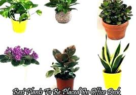 small office plant. Small Desk Plants Office Mesmerizing Good Plant Best Medium Size Of For