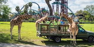 a safari at busch gardens summer camp photo busch gardens tampa bay
