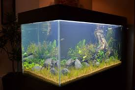 picture of the finished aquarium and the future