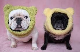Crochet Dog Hat Pattern Beauteous Crochet Dog Hat Pattern Ideas Best Collection Video Tutorial