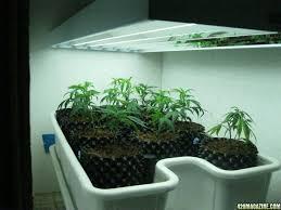 mesmerizing fluorescent grow lights bulbs 3 fluorescent grow light fixture re show me your