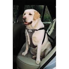 ancol car harness