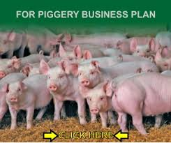Pig Farming Business Plan Pig Farming Business Plan Agrotech Youth Africa