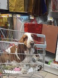 Pin by Coleen Knox on Basset Hounds   Bassett hound, Basset hound, Hound dog