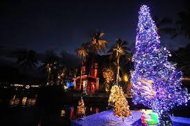 Christmas Tree Hawaii